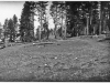 """photo of saw mill area with """"10-b"""" written on back."""