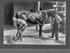 print of horse being shoed with Eugene Lee Anderson