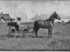 """"""" print of lady in horse-drawn buggy with Lakeport Pavilion in"""