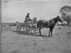 print of Bill Slotterback on a horse-drawn wagon
