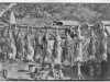 """"""" print of 10 deer carcasses suspended from a pole with 7 or 8"""