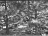 Negative of a photo of something in the woods.