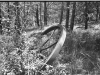 Negative of a picture of a steel drive wheel in the woods.